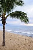 Palm Tree On Beach In Puerto Vallarta Mexico