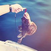 Man holding fish on hook - instagram effect