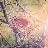 Birds nest in tree with instagram effect