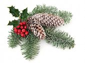Christmas and winter decoration with holly, pine cones, mistletoe and  fir leaf sprigs over white background.