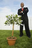African American businessman looking at money tree