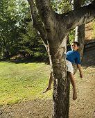 Asian boy sleeping in tree
