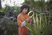 Hispanic boy looking through magnifying glass at plant
