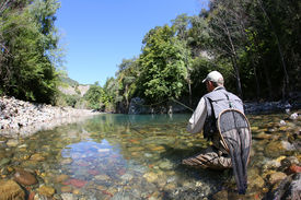 picture of fly rod  - Fly fisherman fishing trouts in freshwater river - JPG