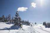Backpackers in beautiful winter landscape with snow covered trees and blue sky