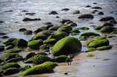 A seascape with moss covered rock on California coast