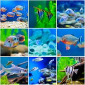 collection  photos from  saltwater world in aquarium