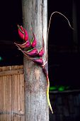 Heliconia Flower Decorated Bamboo Hut