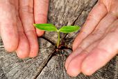 picture of nurture  - hands holding and nurturing a young green plant growing on dead tree trunk - JPG