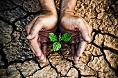 picture of water shortage  - hands holding a tree growing on cracked earth - JPG