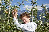 smiling teenager picking an apple
