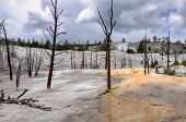 Dead trees stand in the travertine terrace of Mammoth Hot Springs, Yellowstone National Park.