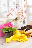Planting colorfull flower in a flowerpot at home. Soil, yellow gloves, flowerpot and flowers ready to plant on the table