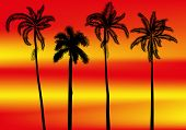 illustration with palm trees on red and yellow sunset background