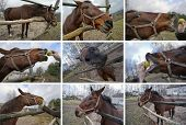 pic of horses eating  - Five minutes from life of a dirty but cheerful red horse who eats apples - JPG