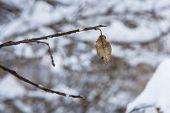 Single Brown Leaf On A Tree
