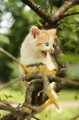 Cute Kitten Climbing Tree And Meowing Funny