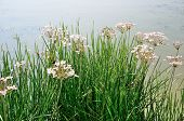 Nice grass with flowers near the lake water.