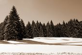 Landscape With Snow And Trees In Winter
