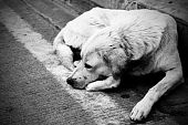 foto of stray dog  - Homeless stray dog laying at urban road - JPG