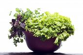Fresh herbs isolated on white background. Basil, parsley and salad