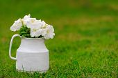 stock photo of petunia  - A pot with white petunia flowers on green grass with copy space - JPG