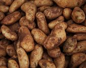close up of sweet potatoes on market stand