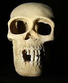 Human skull model on black background