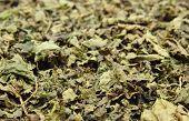 stock photo of nettle  - Closeup of dried nettle heap of dried nettle  - JPG