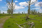 picture of herd horses  - Herd of konik horses in nature in spring - JPG