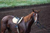 stock photo of horse-breeding  - Horse racing is a type of testing horses on playfulness  - JPG