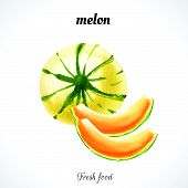 stock photo of melon  - Watercolor illustration of a painting technique - JPG