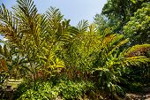 pic of torches  - Torch ginger flower in the garden of Thailand - JPG