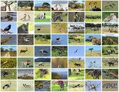 pic of african animals  - Collage of African animals in the parks of Kenya - JPG