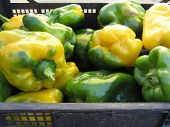 stock photo of yellow-pepper  - Green and yellow peppers in black plastic box hand picked just as they ripen from the garden in a Tuscan farm  - JPG