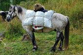 picture of horse-breeding  - Loaded horse is ready to hit the road - JPG