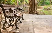 picture of bench  - imaeg of bench in the park   - JPG