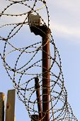 foto of barbed wire fence  - barbed wire on a wooden fence and lantern - JPG
