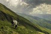 Mountain Horse In Nature Landscape. Horse In Nature Landscape. Mountain Horse In Nature Ambient On A poster