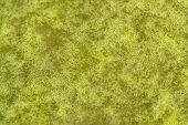grünen Schleim spritzig-detail