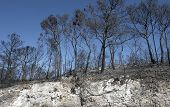 Burned Forest And Scarp