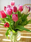 picture of flower vase  - tulips on light wood table with slivers of light shinning - JPG
