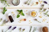 Bottles Of Essential Oil With Frankincense, Oregano, Lavender And Other Fresh Herbs On A White Backg poster