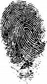 Black and White Vector Fingerprint - Very accurately scanned and traced ( Vector is transparent so i