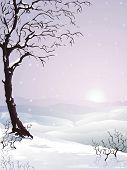Pflaumenbaum Schnee