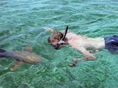Snorkeling With Sharks In Shark Alley