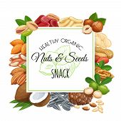 Square Banner Template With Nuts And Seeds. Pistachio, Cashew, Coconut, Hazelnut And Macadamia. Cola poster