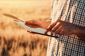 Smart Farming, Using Modern Technologies In Agriculture. Male Agronomist Farmer With Digital Tablet  poster