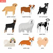 Dog Breeds. Vectors Dogs Breeding Collection Isolated On White Background, Great Dane And Komondor,  poster