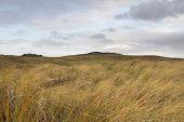 Scottish Hilly Grassland